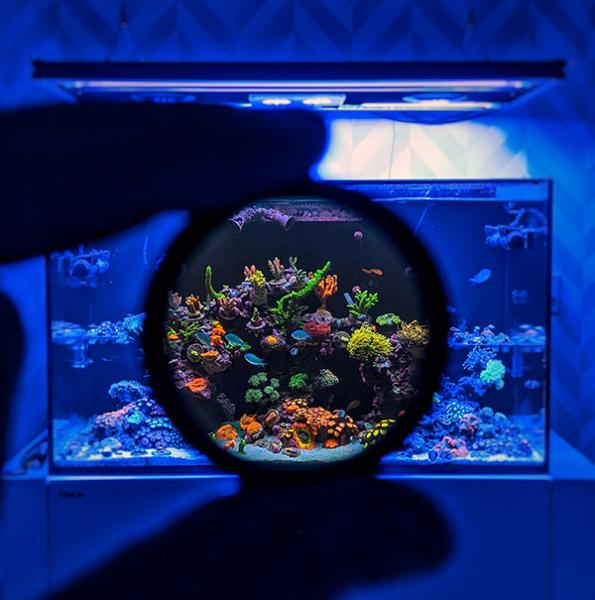 Coral-Colour-Lens-Tristan-2
