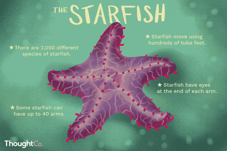 Facts-about-sea-stars-2291865-STILL02-v2-69e6acc9f20f470cbfed7b7083a9f178