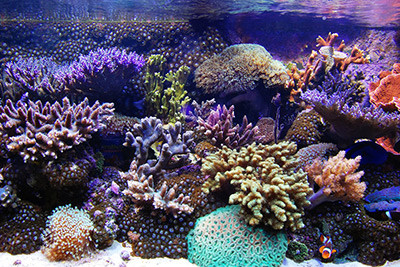 marine-aquarist-mistakes1